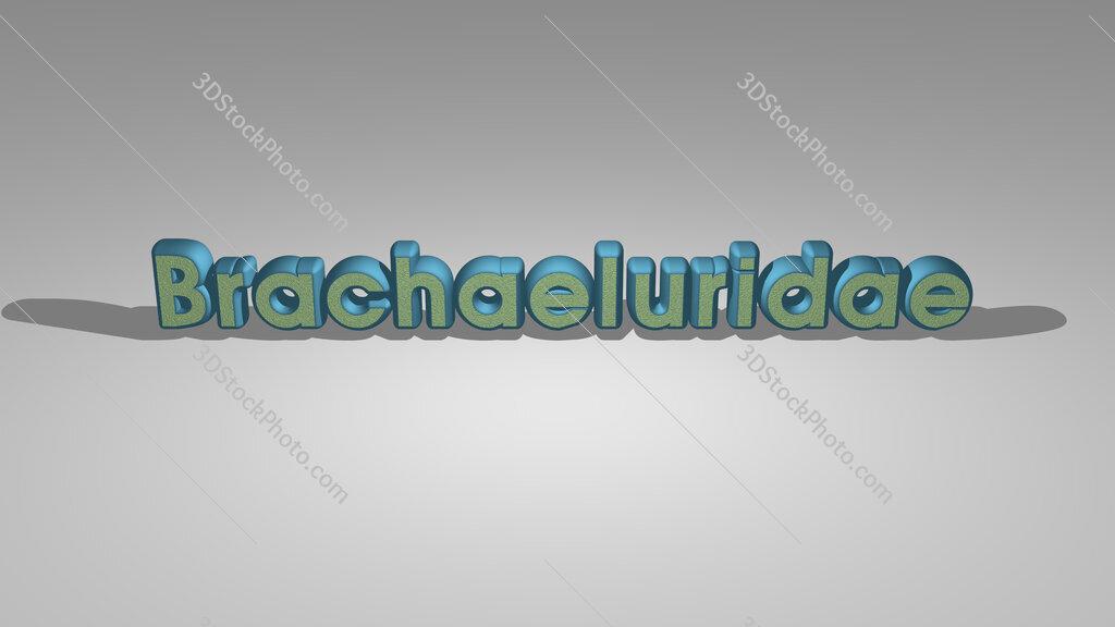 Brachaeluridae