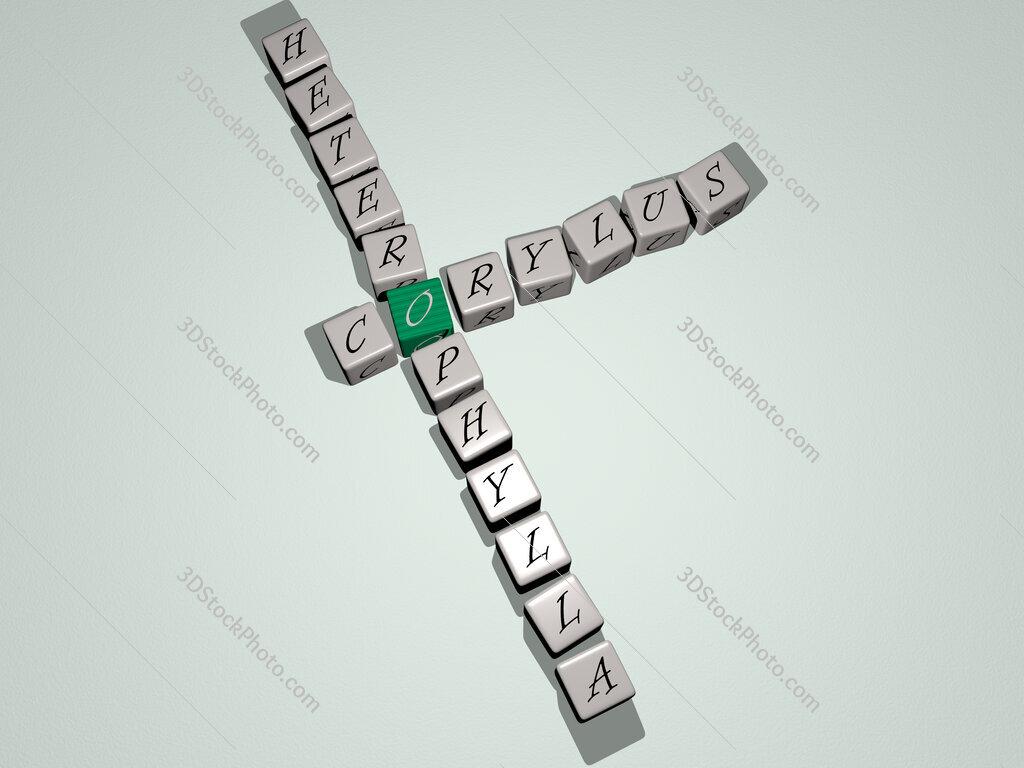 Corylus heterophylla crossword by cubic dice letters