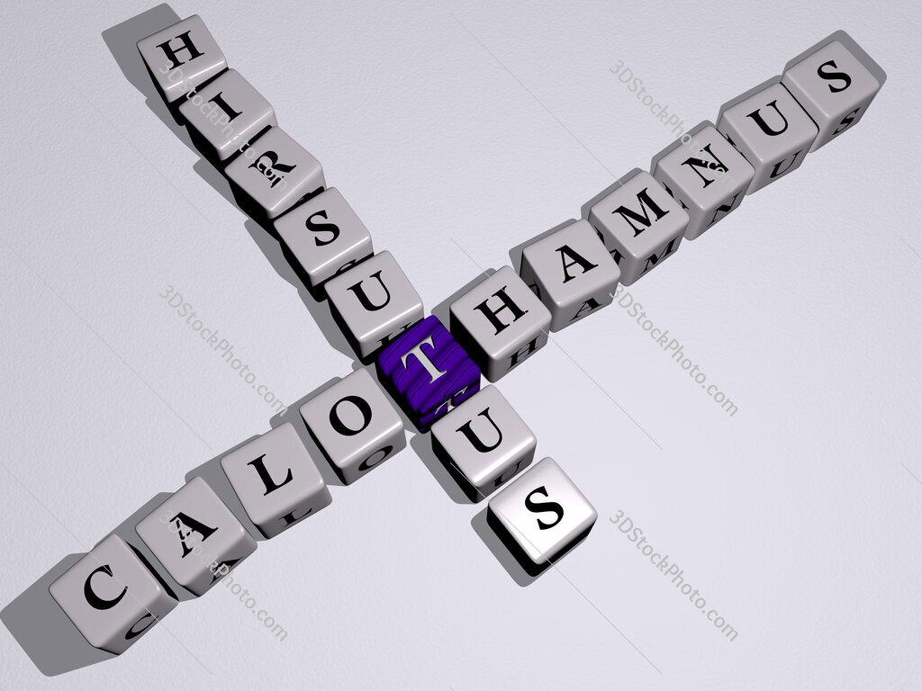 Calothamnus hirsutus crossword by cubic dice letters