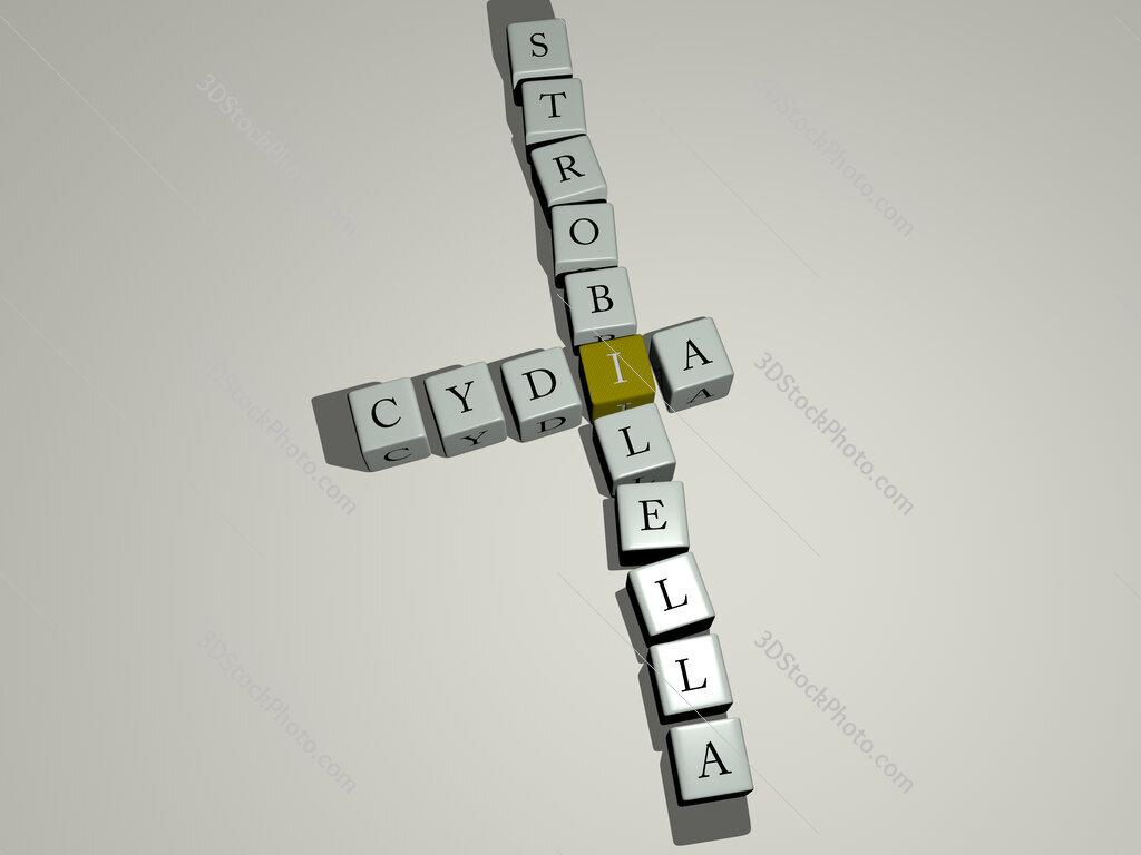 Cydia strobilella crossword by cubic dice letters