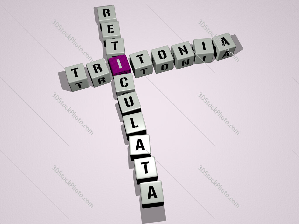 Tritonia reticulata crossword by cubic dice letters