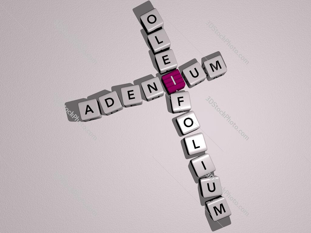 Adenium oleifolium crossword by cubic dice letters