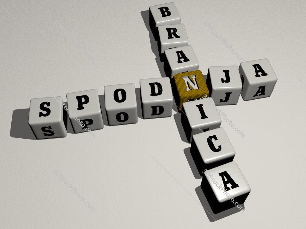 Spodnja Branica crossword by cubic dice letters