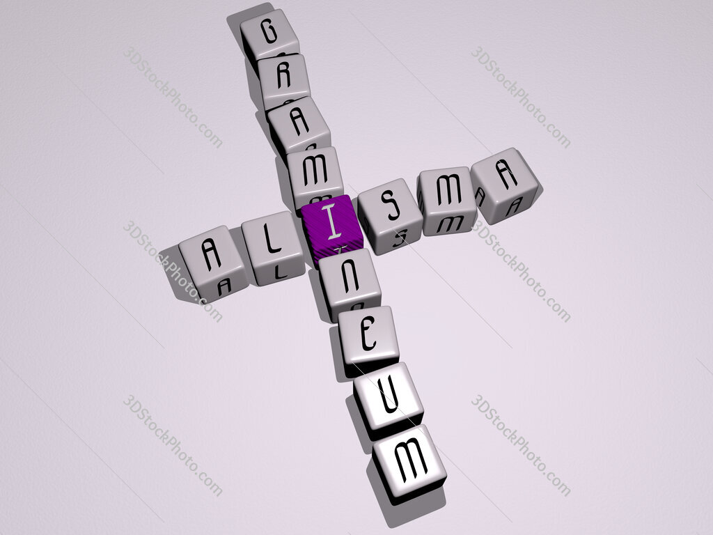 Alisma gramineum crossword by cubic dice letters