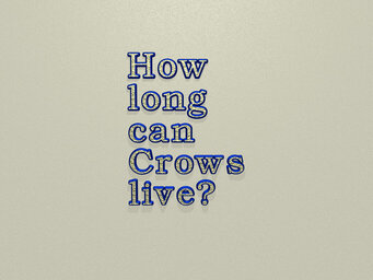 How long can Crows live?