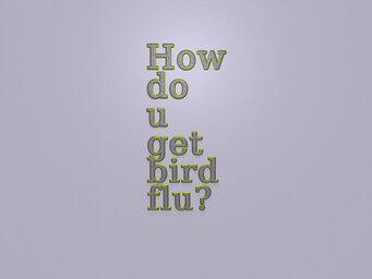How do u get bird flu?