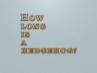 How long is a hedgehog?
