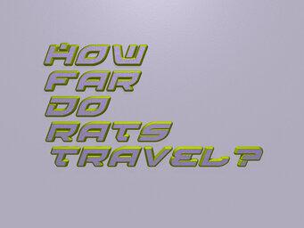 How far do rats travel?