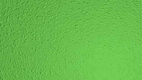 Yellow green (Color Wheel)