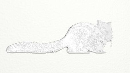 cat like squirrel