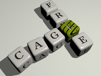 Are cage free eggs better?