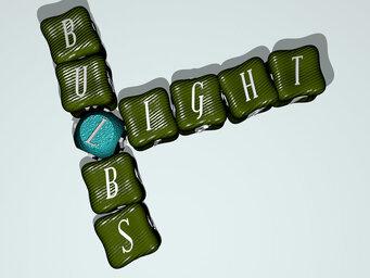 Are brake light bulbs red or white?
