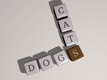 Are cats smarter than dogs yes or no?