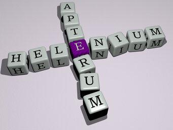 Helenium apterum