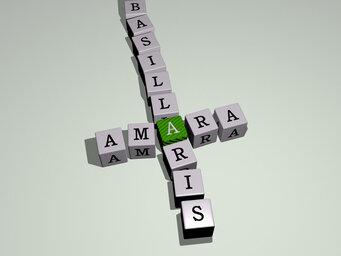 Amara basillaris