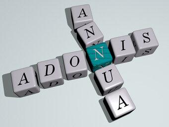 Adonis annua