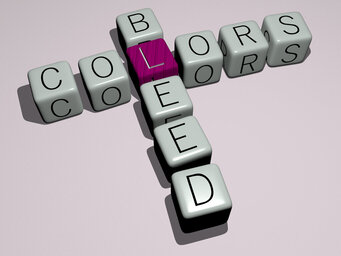 Colors Bleed