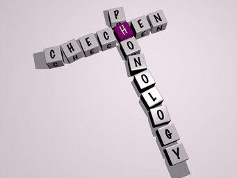 Chechen phonology