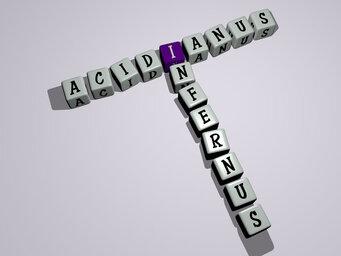 Acidianus infernus
