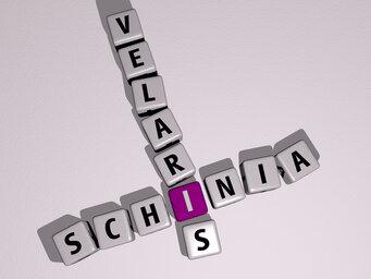 Schinia velaris