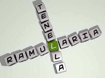 Ramularia tenella