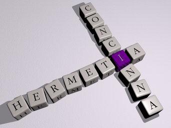 Hermetia concinna