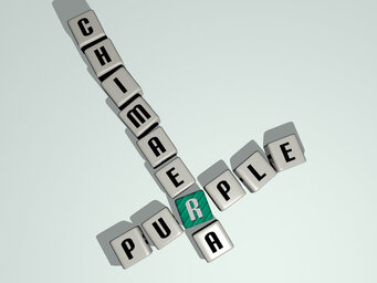 Purple chimaera