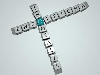 Endotricha thomealis