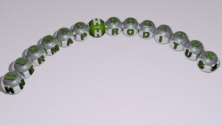 Hermaphroditus