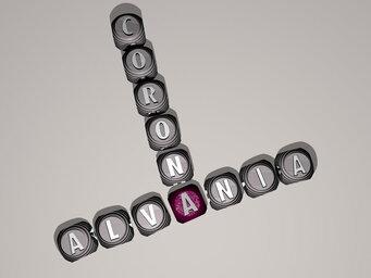 Alvania corona