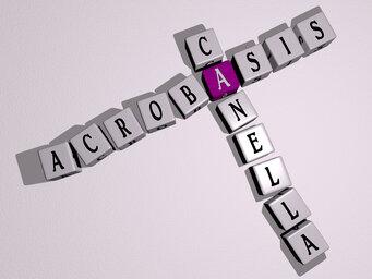 Acrobasis canella