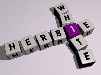 Herbie White