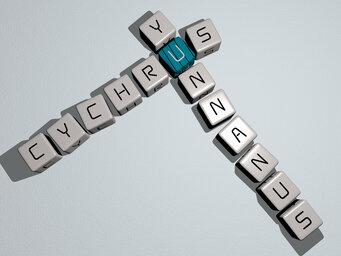 Cychrus yunnanus