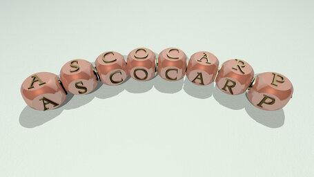 ascocarp