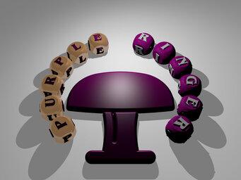 purple ringer