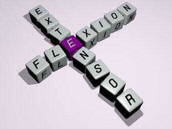 flexion extensor
