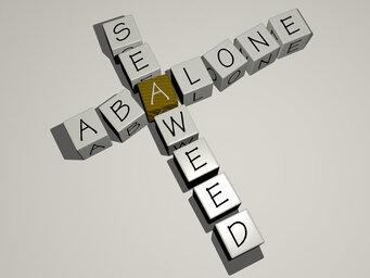 abalone seaweed